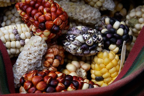 Corn - Amaru, Peru -  Photographer Ashli Akin