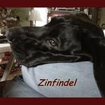 Zinfindel