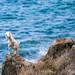Cute Island Goat by Fabi Fliervoet
