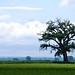 Chimney Rock Tree