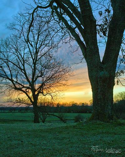 sunset tree grass clouds pasture pecan a850