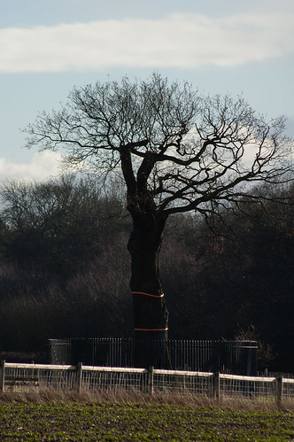 The royal oak, Boscobel