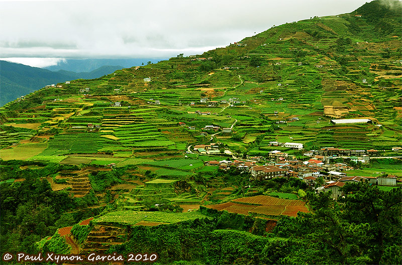 Crop Terraces at Natubleng, Buguias, Benguet