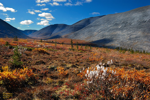 Autumn Tundra in the North Ogilvies