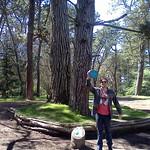 Golden Gate Park DGC