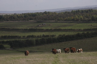 29 September 2016 - Cattle and agroforestry