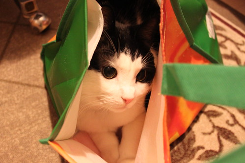 pretty kitty in a bag