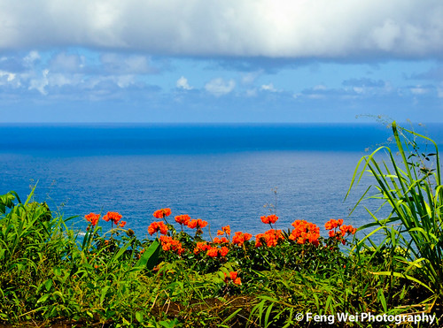 ocean travel blue red sea summer wallpaper vacation color green nature beauty landscape hawaii scenery colorful scenic maui roadtohana