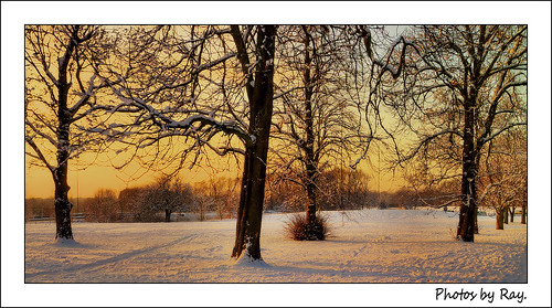 Remembering the Snow !,Bowring Park ,Dec 2010.