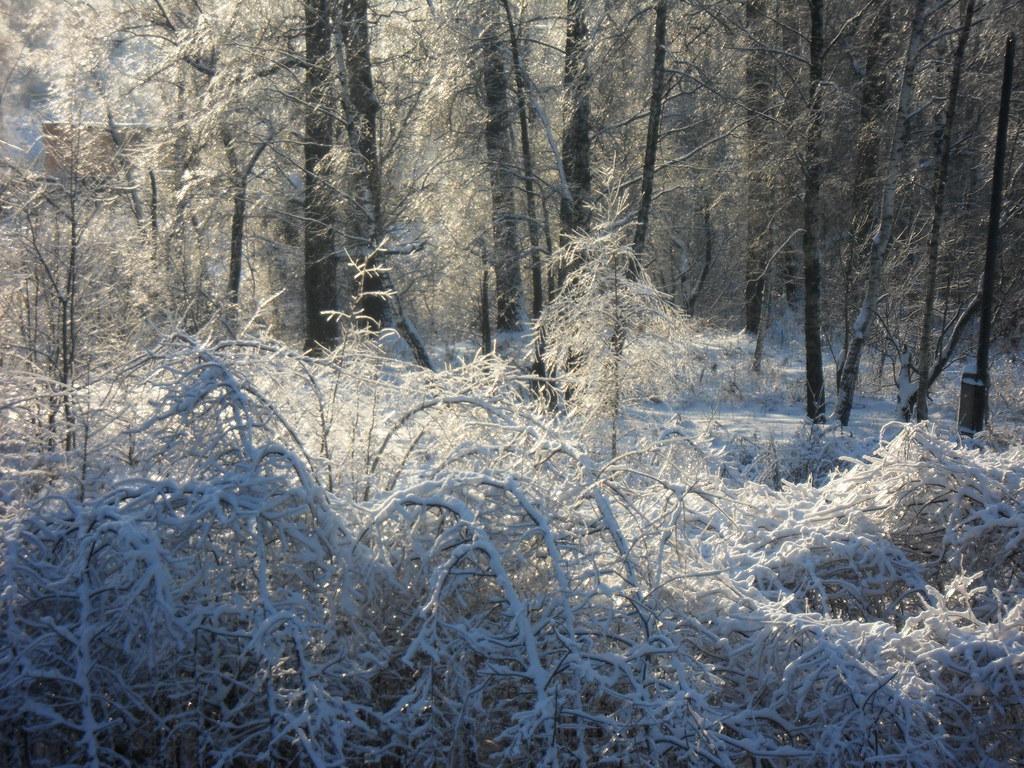 красота зимы011 006
