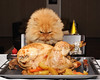 Garfi-Happy Thanksgiving...
