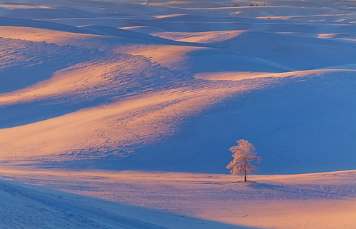 Palouse Winter Moments