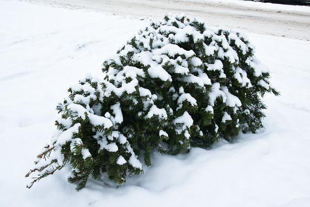 Thrown Out Snow Covered Christmas Tree January 14, 20111 from Flickr via Wylio