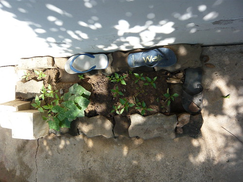 sandal landscaping