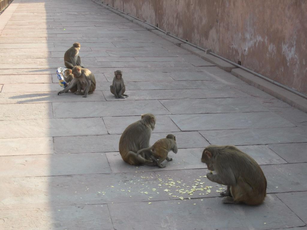 Agra Fort Dinner Time