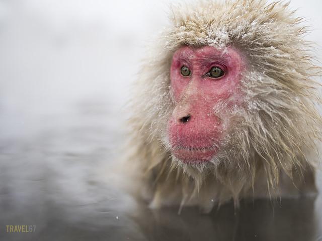 Monkey Stare