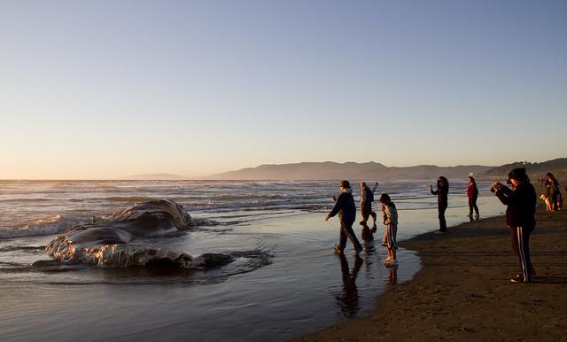 Whale carcass on Ocean Beach, San Francisco  (2010)
