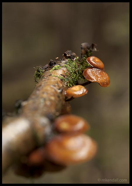 Some more fungi I