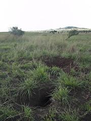 wetland(0.0), flower(0.0), field(0.0), chrysopogon zizanioides(0.0), lawn(0.0), marsh(0.0), bog(0.0), prairie(1.0), land lot(1.0), shrub(1.0), steppe(1.0), soil(1.0), grass(1.0), shrubland(1.0), plant(1.0), natural environment(1.0), meadow(1.0), pasture(1.0), vegetation(1.0), grassland(1.0),