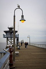 SCL Pier, Light and Gulls