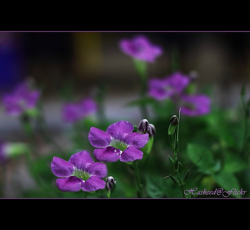 The color of springtime is in the flowers, the color of winter is in the imagination. (Front Page)