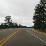 Entering Pine Forest in El Malpais National Monument on Route 53, New Mexico