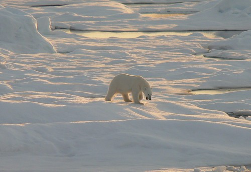 The Polar Bear Country