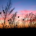 Small photo of Sunsets over Kansas
