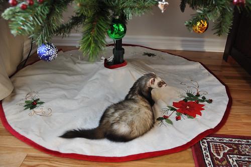 Spunkmeyer under the tree