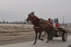 racing(0.0), mule(0.0), vehicle(1.0), pack animal(1.0), horse harness(1.0), horse and buggy(1.0), carriage(1.0), cart(1.0),