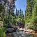 Bursting Through the Riparian on Fourmile Creek