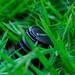 Canon in the grass by Yozafath Norori