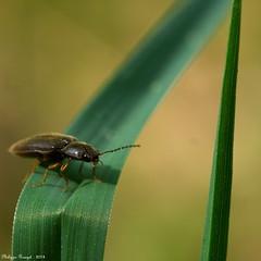insecte de forêt