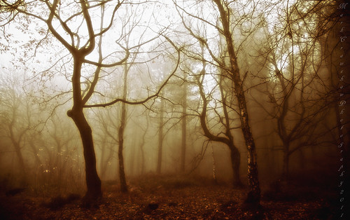 autumn trees mist leaves woods sheffield blackwhitephotos grenowoods canon5dmarkii markcrawshaw