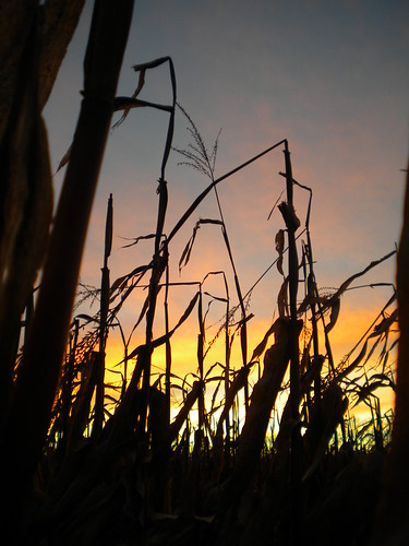 sunset fall field corn peopleless