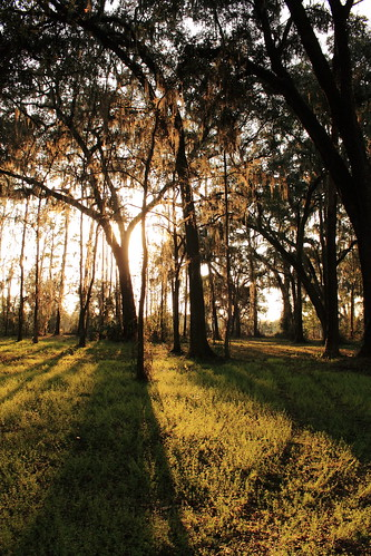 sunset nature florida path trail brooksville