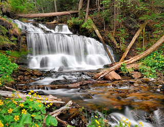 """Marsh Marigolds""  Wagner Falls, Munising Michigan"