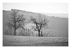Appletrees - Voitsberg