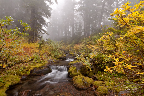 Autumn in Willamette Forest