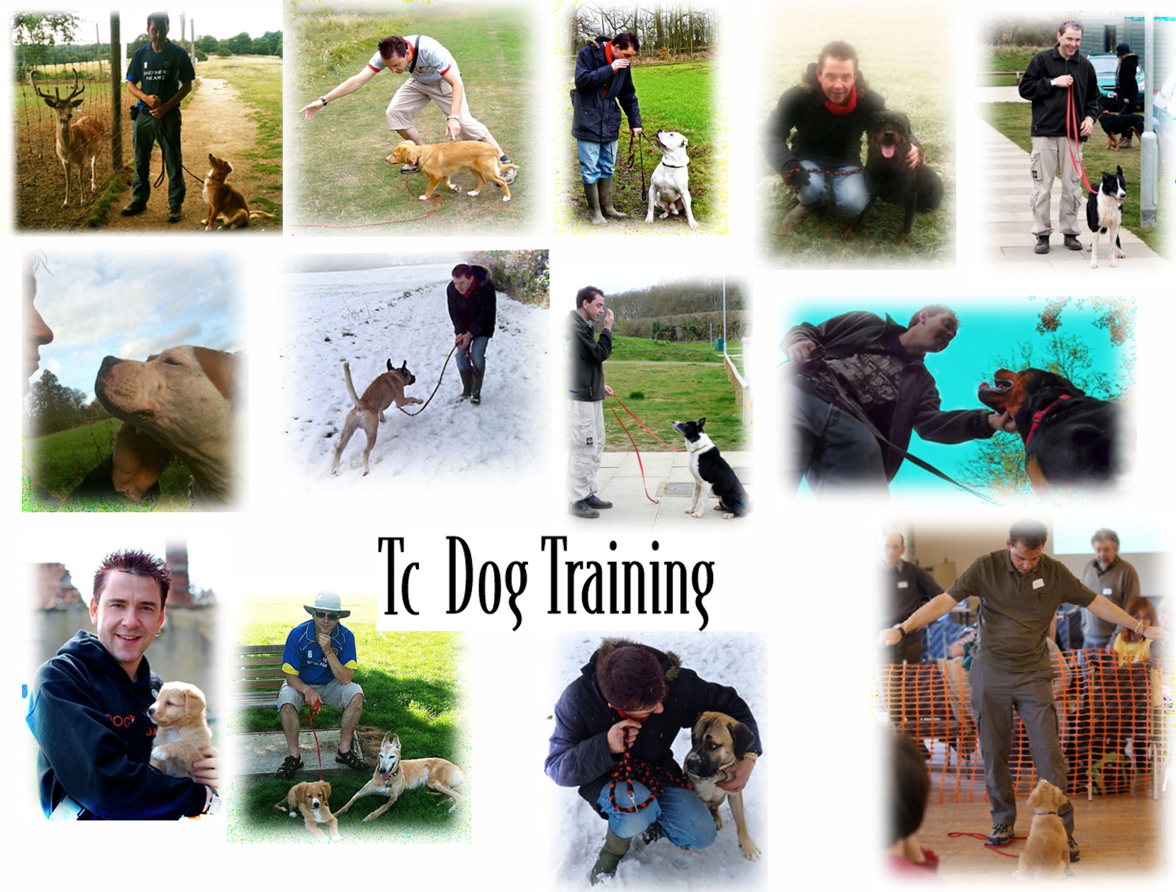Dog Behaviour Training Diagram Barking