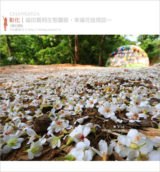 【彰化油桐花】福田桐花生態園區~雪白花毯!每年都會想再回訪的賞桐景點1