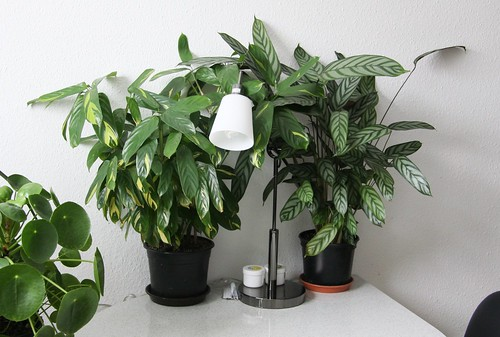 Pflanzen in Küche 4