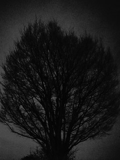 Tree in the Dark
