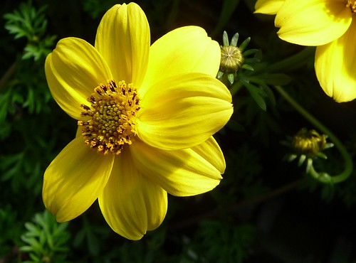 PRETTY YELLOW FLOWER