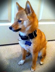 Taro models his new custom black twill collar from kninecouture.com
