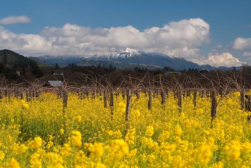 california mountain snow vineyard vines wine healdsburg