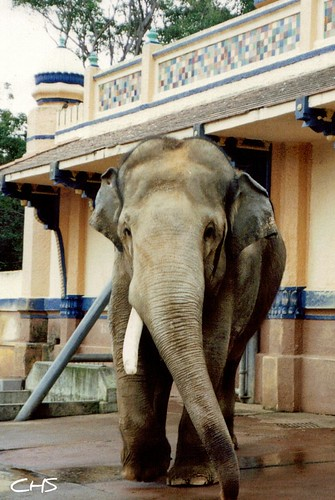 Taronga Zoo, 5th June 1990 - Australia 1990 - Photo 028 by Claire Stocker (Stocker Images)