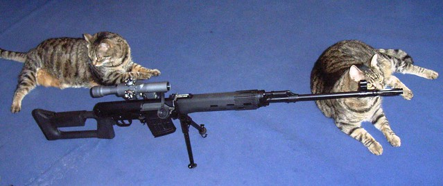 Two Cats and Sniper Rifle | Flickr - Photo Sharing!