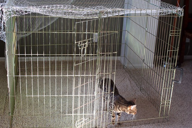 Portable Outdoor Cat Enclosures : Portable outdoor cat enclosure i took an exercise pen