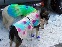 5503559267 e891f8d57a m Dog Costumes and Dog Boots   Staying Safe and Warm for the Holidays
